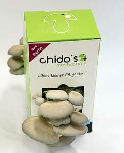 Der kleine Pilzgarten - Chido's Mushrooms