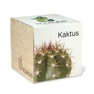 ecocube - Kaktus - Extragoods
