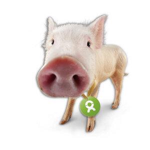 Schwein - OxfamUnverpackt