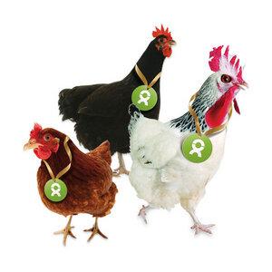 Gackernde Hühner - OxfamUnverpackt