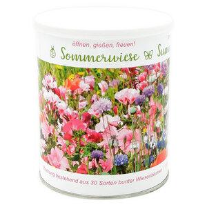 Wildblumenarten - diese Sommerwiese enthält 30 verschiedene Sorten - MacFlowers