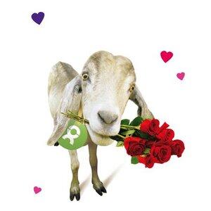 Ziege (Valentinskarte) - OxfamUnverpackt