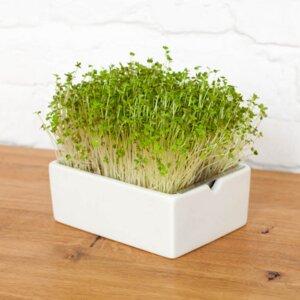 Microgreens Starterkit - Heimgart