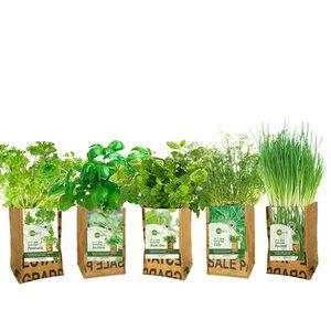 Let it grow - Kräuter-Pflanze - Fairtrade Upcycling - SuperWaste