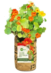 Let it grow - Blumen - Fairtrade Upcycling - SuperWaste