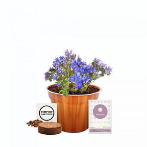 meinwoody Blumen-Anzuchtset - meinwoody