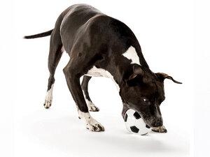 Robuster Öko-Soccerball für Hunde  - Planet Dog