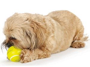 Tennisball aus Orbee Tuff für Hunde - Planet Dog