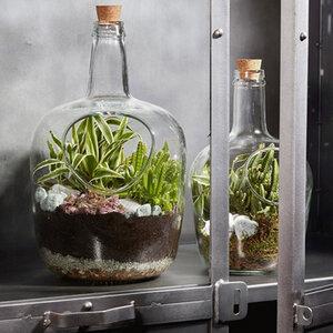Glas Terrarium Daniel 30cm H - Mitienda Shop