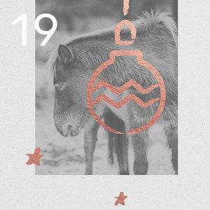 19. Türchen - Adventskalender