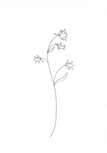 Blumen Druck Glockenblume - STUDIO KARAMELO