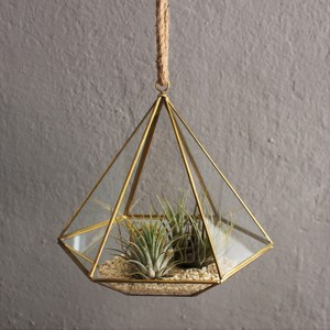 Geometrisches Terrarium aus Glas - Diamant - für Sukkulenten - Mitienda Shop