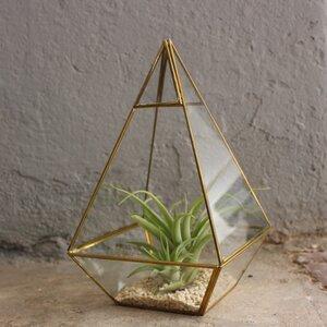 Geometrisches Terrarium aus Glas - Pyramide - für Sukkulenten - Mitienda Shop