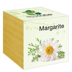 """Margarite im Holzwürfel - """"Ecocube"""" - EcoCube"""