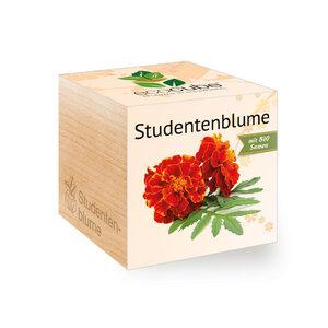Studentenblume im Holzwürfel mit Bio-Samen - EcoCube