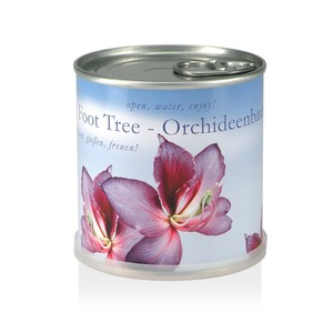 Pflanzen in der Dose - Orchideenbaum - MacFlowers