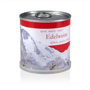Pflanzen in der Dose - Edelweiss Österreich - MacFlowers