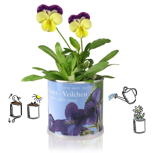 pflanzen in der dose edelweiss schweiz von macflowers bei avocado store g nstig kaufen. Black Bedroom Furniture Sets. Home Design Ideas