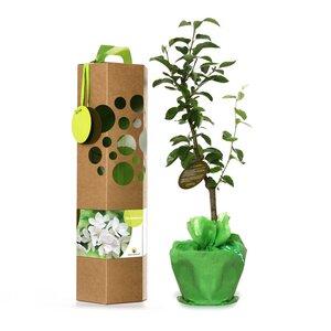 Birnbaum als Geschenk - SchenkeinBäumchen