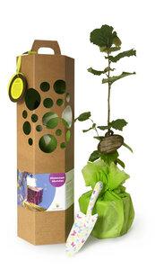 Glückwunschbaum als Geschenk zum Geburtstag und andere Anlässe - SchenkeinBäumchen