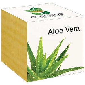 "Aloe Vera im Holzwürfel - ""Ecocube"" - EcoCube"