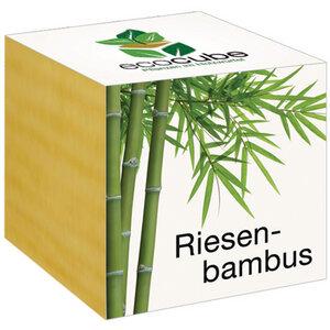 """Riesenbambus im Holzwürfel - """"Ecocube"""" - EcoCube"""