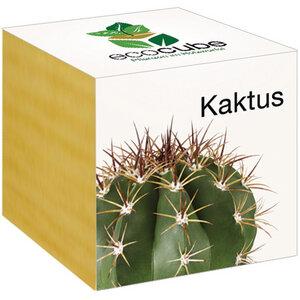 Kaktus im Holzwürfel - 'Ecocube' - EcoCube