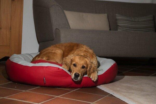 sleepy dog hundebett donut scarlet avocadostore. Black Bedroom Furniture Sets. Home Design Ideas