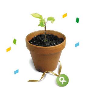 10 junge Bäume (Glückwunschskarte) - OxfamUnverpackt