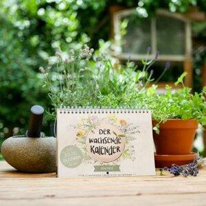 Krautikus - Wandkalender zum Einpflanzen - Zeitlos  - ingegerd Ökolifestyle