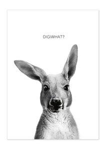 Poster Animal Kangaroo matt - GreenBomb