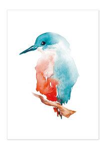 Poster Animal Kingfisher matt - GreenBomb