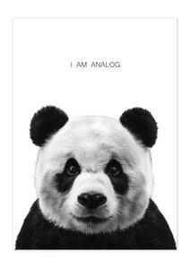 Poster Animal Panda matt - GreenBomb
