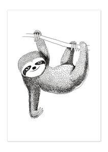 Poster Animal Sloth matt - GreenBomb