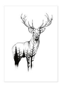 Poster Animal Wild Life Deer matt - GreenBomb