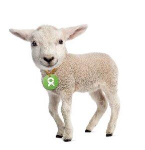 Lamm - OxfamUnverpackt