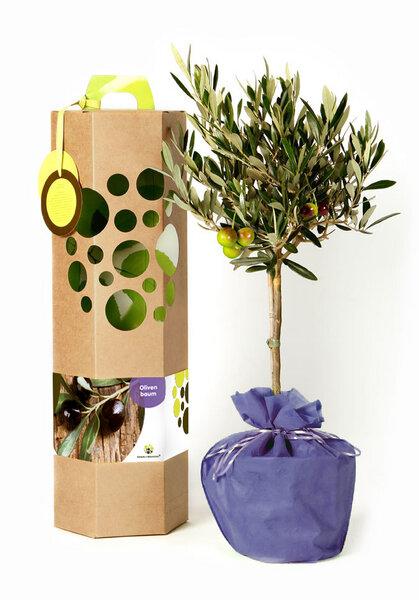 schenkeinb umchen olivenbaum als geschenk avocadostore. Black Bedroom Furniture Sets. Home Design Ideas