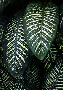 Jungle 1 - Poster von Christina Ernst - Photocircle