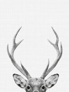 Deer - Poster von Vivid Atelier - Photocircle