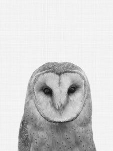 Owl - Poster von Vivid Atelier - Photocircle