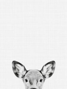 Doe (Black and White) - Poster von Vivid Atelier - Photocircle