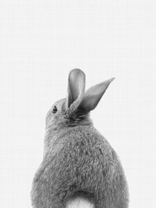 Rabbit Tail (Black and White) - Poster von Vivid Atelier - Photocircle