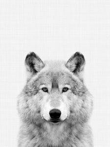 Wolf (Black and White) - Poster von Vivid Atelier - Photocircle