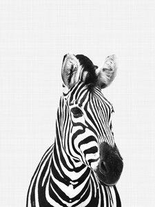 Zebra (Black and White) - Poster von Vivid Atelier - Photocircle