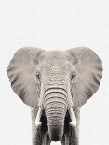 Elephant - Poster von Vivid Atelier - Photocircle