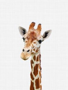 Giraffe - Poster von Vivid Atelier - Photocircle