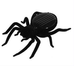 Spinne - Vireo
