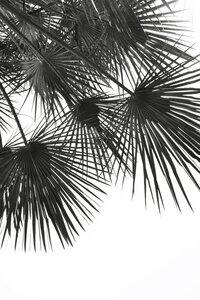 Endless Summer - Wind - Poster von Studio Na.hili - Photocircle