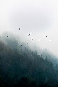 Foggy Morning 4 - Poster von Mareike Böhmer - Photocircle