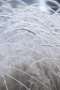 White and Calm - Poster von Studio Na.hili - Photocircle